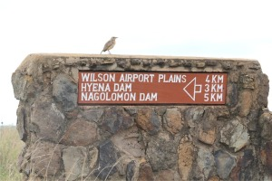 bird on sign