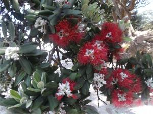 Native plant of New Zealand