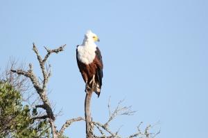 perfect eagle